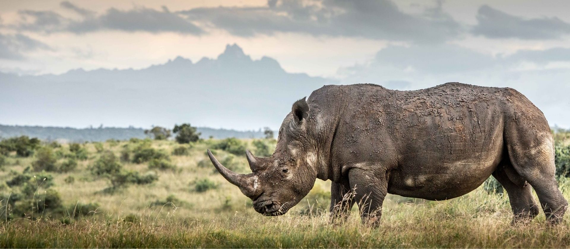 Update on rhino numbers on the Borana-Lewa Landscape